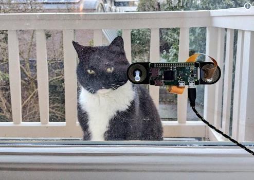 荷兰男子为猫咪设脸部识别装置方便它进屋